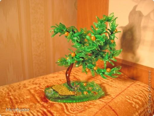 Вот такое апельсиновое деревце выросло у меня :) Подарила подружке фото 4