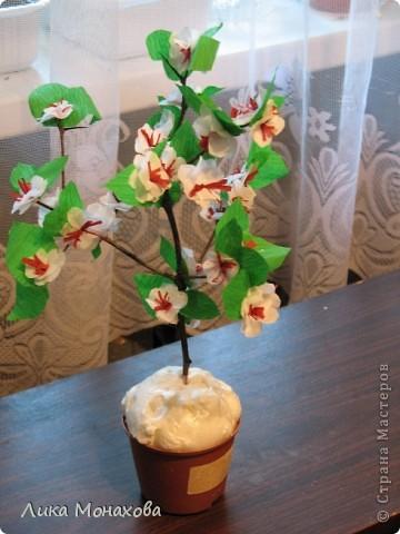Моя яблонька))) фото 1
