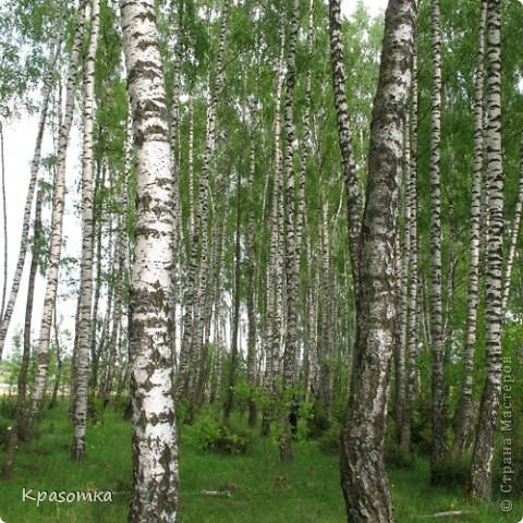 ССЫЛКА НА ЧАСТЬ1: http://stranamasterov.ru/node/199607 Здравствуйте уважаемые мастера и мастерицы! Во второй части наших уроков я бы хотела подробно рассказать как сделать каркас нашей будущей березки. Этот урок, я думаю,  можно будет брать за основу при выполнении других видов деревьев. У нас уже готовы ветви нашего дерева. Их 7 штук. фото 2