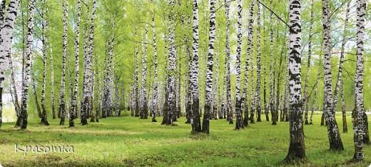 ССЫЛКА НА ЧАСТЬ1: http://stranamasterov.ru/node/199607 Здравствуйте уважаемые мастера и мастерицы! Во второй части наших уроков я бы хотела подробно рассказать как сделать каркас нашей будущей березки. Этот урок, я думаю,  можно будет брать за основу при выполнении других видов деревьев. У нас уже готовы ветви нашего дерева. Их 7 штук. фото 5