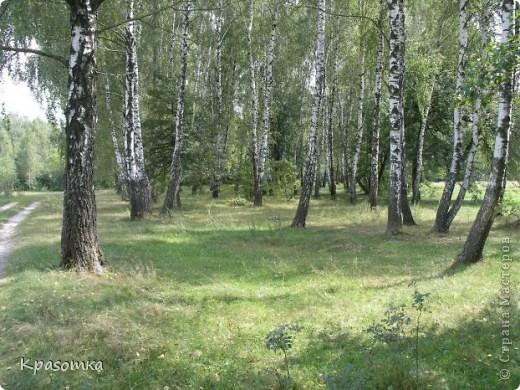 ССЫЛКА НА ЧАСТЬ1: http://stranamasterov.ru/node/199607 Здравствуйте уважаемые мастера и мастерицы! Во второй части наших уроков я бы хотела подробно рассказать как сделать каркас нашей будущей березки. Этот урок, я думаю,  можно будет брать за основу при выполнении других видов деревьев. У нас уже готовы ветви нашего дерева. Их 7 штук. фото 4