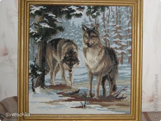 """Это моя гордость, вышивалась на одном дыхании. Картина называется """"Волки"""" из серии """"Сотвори Сама"""", нитки шерстяные, канва голубого цвета, клетка крупная и картины получаются как нарисованные яркие и живые."""