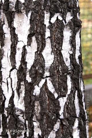 Часть 1. http://stranamasterov.ru/node/199607 Часть 2. http://stranamasterov.ru/node/199628 Часть 3. http://stranamasterov.ru/node/200255 Здравствуйте уважаемые мастера и мастерицы! Продолжаем наши уроки моделирования. Сегодня завершающий этап нашей совместной работы. Мы покрасим наше дерево, покроем лаком и распрямим веточки. фото 2
