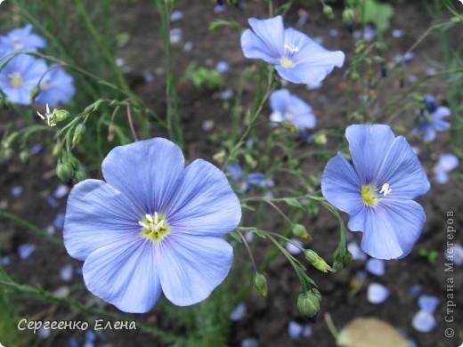Что ни говори, а весна - самое замечательное время года. Каждый день в природе перемены. И каждый новый день краше вчерашнего. Сегодня последний день весны и я, Мурзавей, хочу подвести итоги весенних фотографий моей хозяйки. Смотрите и любуйтесь. фото 12