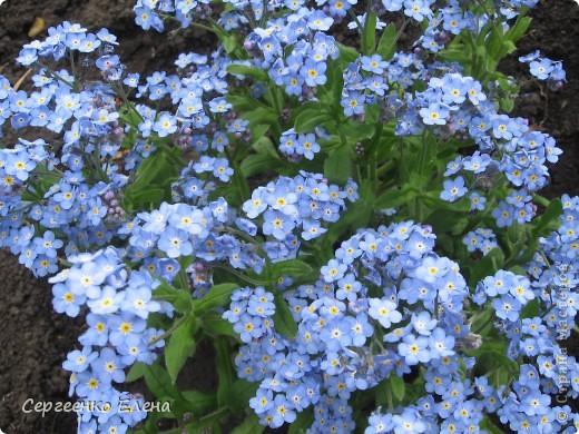 Что ни говори, а весна - самое замечательное время года. Каждый день в природе перемены. И каждый новый день краше вчерашнего. Сегодня последний день весны и я, Мурзавей, хочу подвести итоги весенних фотографий моей хозяйки. Смотрите и любуйтесь. фото 13