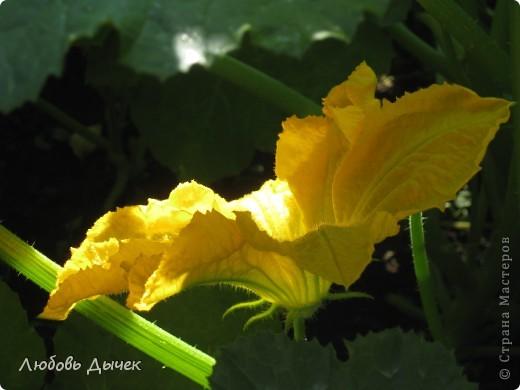 Луч солнца золотой! фото 1