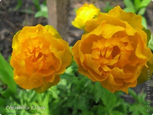Что ни говори, а весна - самое замечательное время года. Каждый день в природе перемены. И каждый новый день краше вчерашнего. Сегодня последний день весны и я, Мурзавей, хочу подвести итоги весенних фотографий моей хозяйки. Смотрите и любуйтесь. фото 14
