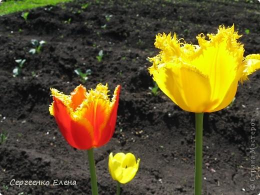 Что ни говори, а весна - самое замечательное время года. Каждый день в природе перемены. И каждый новый день краше вчерашнего. Сегодня последний день весны и я, Мурзавей, хочу подвести итоги весенних фотографий моей хозяйки. Смотрите и любуйтесь. фото 7
