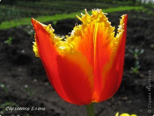Что ни говори, а весна - самое замечательное время года. Каждый день в природе перемены. И каждый новый день краше вчерашнего. Сегодня последний день весны и я, Мурзавей, хочу подвести итоги весенних фотографий моей хозяйки. Смотрите и любуйтесь. фото 10
