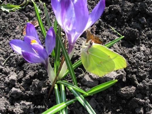 Что ни говори, а весна - самое замечательное время года. Каждый день в природе перемены. И каждый новый день краше вчерашнего. Сегодня последний день весны и я, Мурзавей, хочу подвести итоги весенних фотографий моей хозяйки. Смотрите и любуйтесь. фото 2