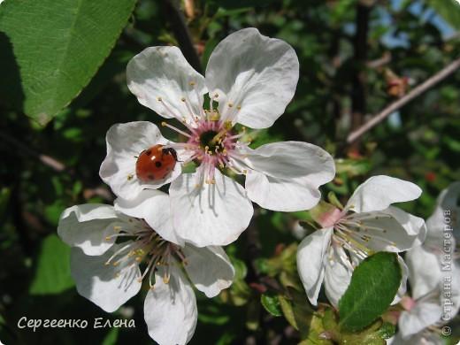 Что ни говори, а весна - самое замечательное время года. Каждый день в природе перемены. И каждый новый день краше вчерашнего. Сегодня последний день весны и я, Мурзавей, хочу подвести итоги весенних фотографий моей хозяйки. Смотрите и любуйтесь. фото 3