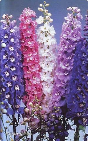 """Здравствуйте,Мастерицы!Получила моя подруга от меня в День своего рождения вот такие дельфиниумы.Она безумно любит эти цветы.Я голову """"сломала"""",как,и из чего сделать их.Хорошо,что увидела эти цветы и МК к ним у PrincessaMoskva , http://stranamasterov.ru/node/63061 . Огромное ей спасибо за подробный МК! фото 5"""