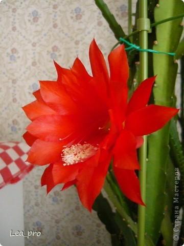 Так начинается цветение фото 3