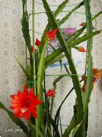 Так начинается цветение фото 4