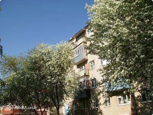 Весна-красавица приходит к нам потихоньку, незаметно, а потом вдруг как все вокруг становится белым и нежным. Начинает этот белоснежный танец вишня. Вся  как белым облаком одета. фото 3