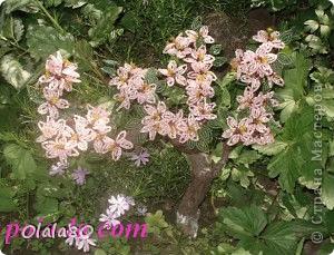 Сакура из бисера. фото 2