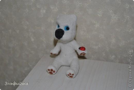 Мишка - малышка. Зачем он так  боится Божью коровку? фото 4