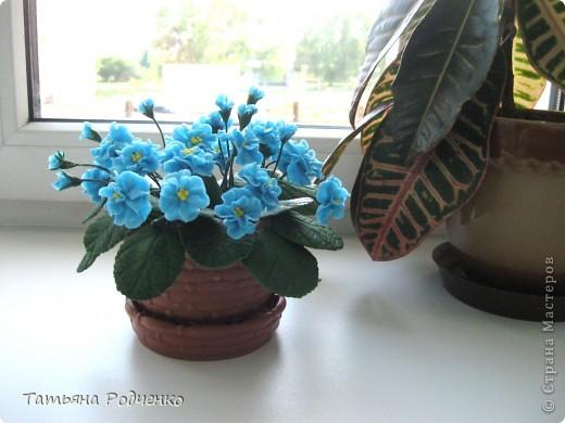 ... У девочек вишня, орехи. орхидеи, а у меня опять... фиалки))). Пока страшно браться за что-либо серьёзное... фото 3