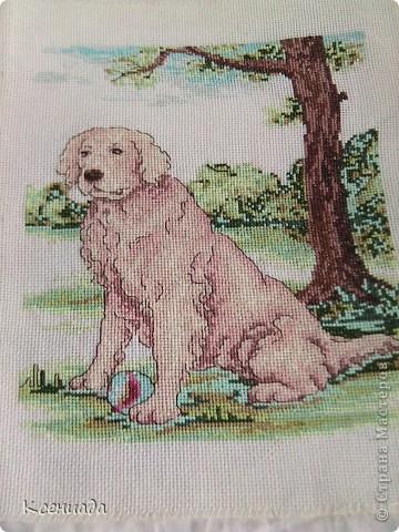 Собака фото 1