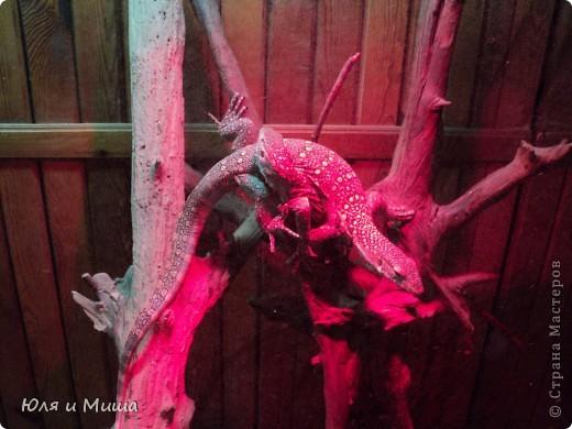 Привет! Я Рыб! Я живу в Тбилисском акватеррариуме! И очень люблю объектив фотоаппарата!  фото 3