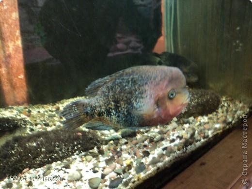 Привет! Я Рыб! Я живу в Тбилисском акватеррариуме! И очень люблю объектив фотоаппарата!  фото 5