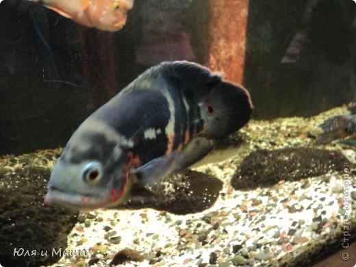Привет! Я Рыб! Я живу в Тбилисском акватеррариуме! И очень люблю объектив фотоаппарата!  фото 6