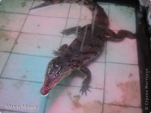 Привет! Я Рыб! Я живу в Тбилисском акватеррариуме! И очень люблю объектив фотоаппарата!  фото 8