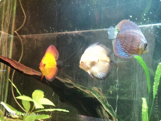 Привет! Я Рыб! Я живу в Тбилисском акватеррариуме! И очень люблю объектив фотоаппарата!  фото 9