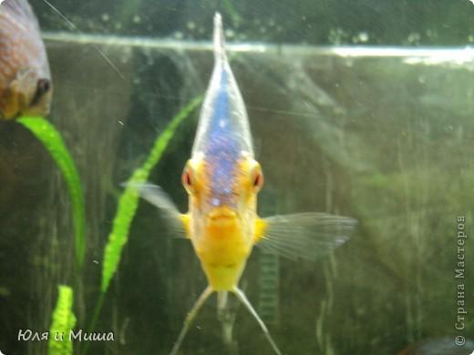 Привет! Я Рыб! Я живу в Тбилисском акватеррариуме! И очень люблю объектив фотоаппарата!  фото 1