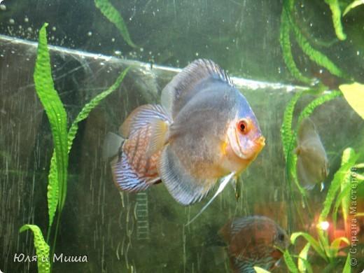 Привет! Я Рыб! Я живу в Тбилисском акватеррариуме! И очень люблю объектив фотоаппарата!  фото 10