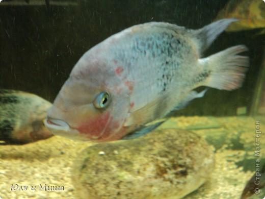 Привет! Я Рыб! Я живу в Тбилисском акватеррариуме! И очень люблю объектив фотоаппарата!  фото 11