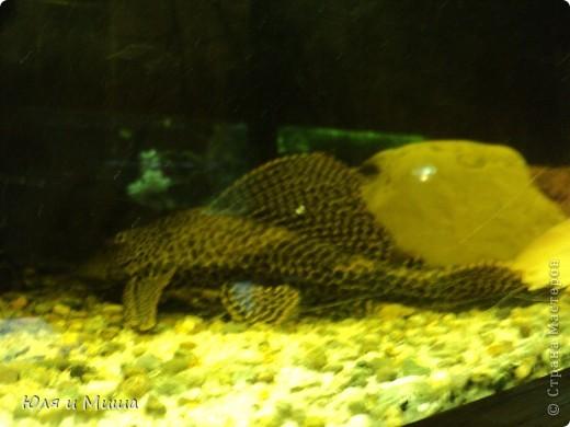 Привет! Я Рыб! Я живу в Тбилисском акватеррариуме! И очень люблю объектив фотоаппарата!  фото 14