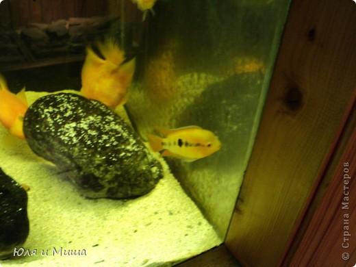 Привет! Я Рыб! Я живу в Тбилисском акватеррариуме! И очень люблю объектив фотоаппарата!  фото 16