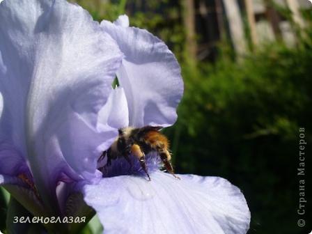 Потихоньку отцветают тюльпаны... фото 17