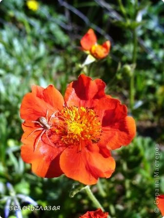 Потихоньку отцветают тюльпаны... фото 20