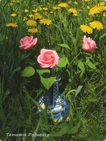 """Предлагаю вашему вниманию розы из ХФ на """"прогулке"""" фото 3"""
