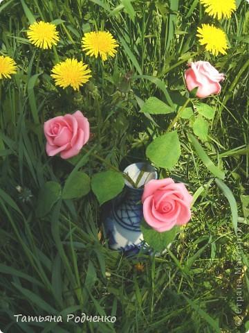 """Предлагаю вашему вниманию розы из ХФ на """"прогулке"""" фото 10"""