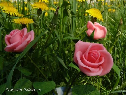 """Предлагаю вашему вниманию розы из ХФ на """"прогулке"""" фото 4"""