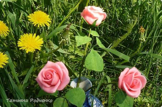 """Предлагаю вашему вниманию розы из ХФ на """"прогулке"""" фото 11"""