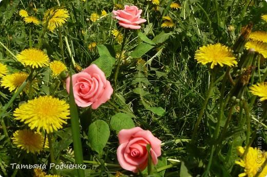 """Предлагаю вашему вниманию розы из ХФ на """"прогулке"""" фото 12"""