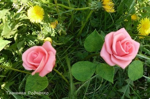 """Предлагаю вашему вниманию розы из ХФ на """"прогулке"""" фото 8"""