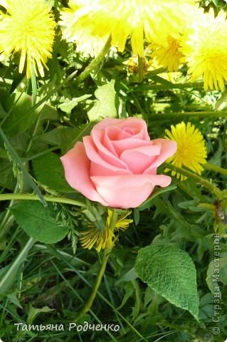 """Предлагаю вашему вниманию розы из ХФ на """"прогулке"""" фото 1"""