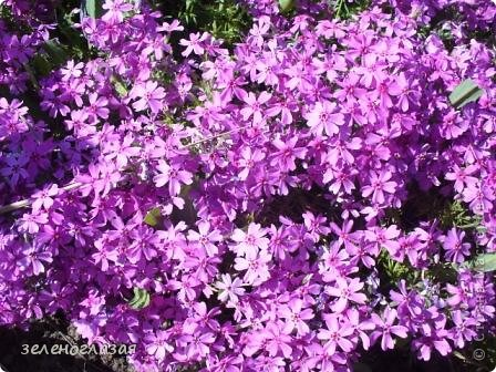 Потихоньку отцветают тюльпаны... фото 22