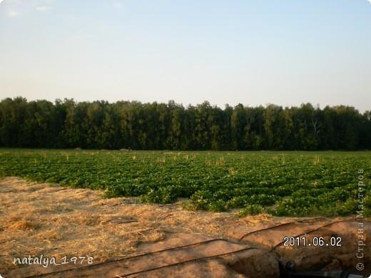Ягодные поля фото 5