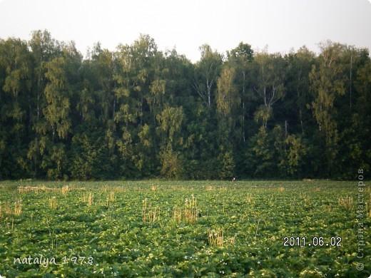 Ягодные поля фото 2