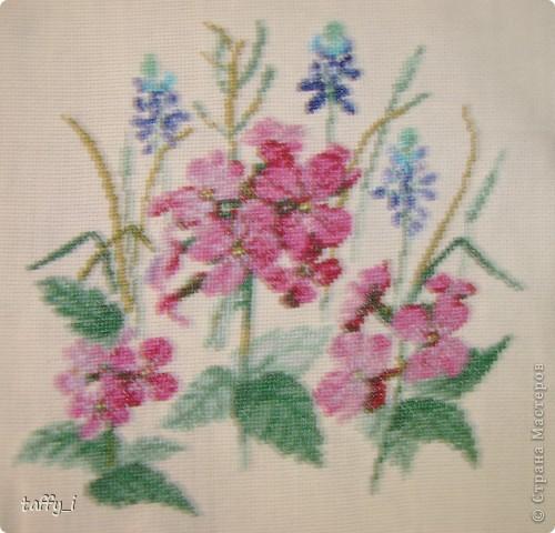 Такса. LORI, В-004. 5 цветов. 64*58 крестиков. 15*13 см. Март 2009 год. фото 2