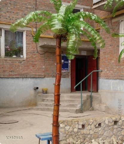 Пальмочки фото 2