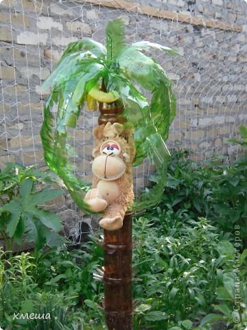 Пальмочки фото 1