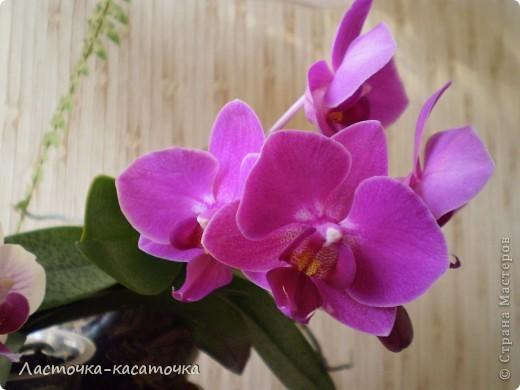 Это мои орхидеи  фото 3