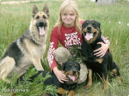 Немецкая овчарка Дэн, ротвейлерша Витта и восточноевропейская овчарка Рэтт фото 7